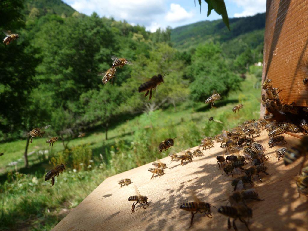 Nos ruches