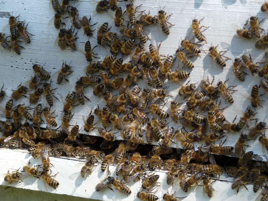 Vue entrée ruche
