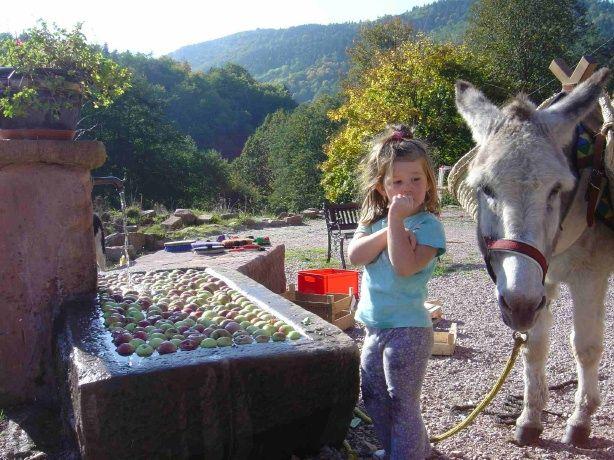 Colline et fontaine de pommes