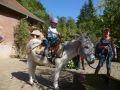 promenade en âne alsace