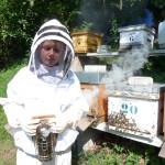 Les ruches et leurs ouvrières